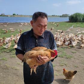 「万宁」母鸡-贫困户林海雄的小海母鸡(仅限万宁地区购买)