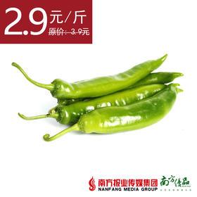 【自然健康】四季绿黄皮椒  约500g/份