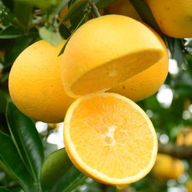 湖南麻阳冰糖橙  皮薄肉多 果小汁甜  5斤(单果 60-70mm)包邮