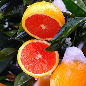 秭归脐橙中华红血橙  不打蜡不上色现摘现发4斤装包邮(拍1发4斤,拍2发9斤或8斤+榨汁杯)