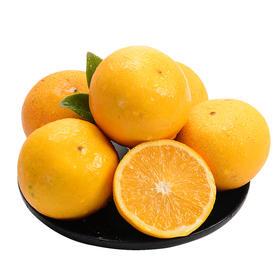 湖南永兴冰糖橙5斤礼盒装