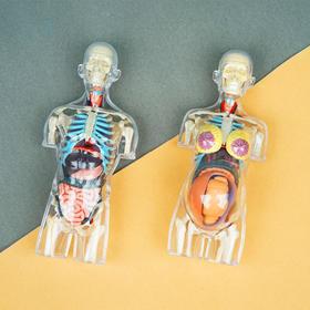 酷奇玩具 | 4dmaster解剖模型 人体 2款 立体diy手工摆件