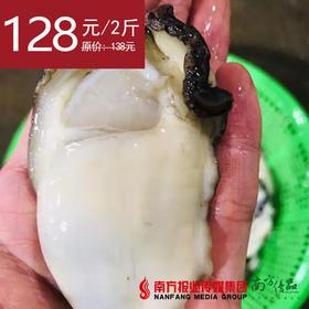 【火锅首选】海上补品 饶平大蚝花  蚝肉  2斤