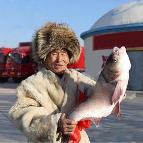查干湖冬捕鱼野生鱼冷冻东北大头鱼1条礼盒装6-8斤