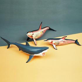 酷奇玩具 | 4dmaster解剖模型 海洋生物 3款 立体diy手工摆件