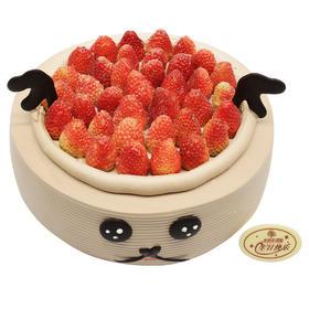 草莓季蛋糕 |「麋鹿」
