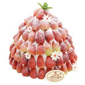 草莓季蛋糕 |「初雪」