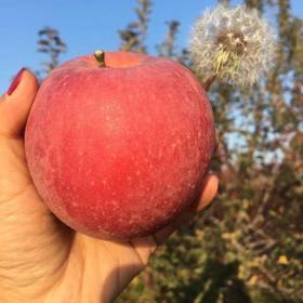 【临猗天然冰糖心丑苹果】越丑越好吃,童年的味道,脆甜多汁,营养美味,健康新鲜!