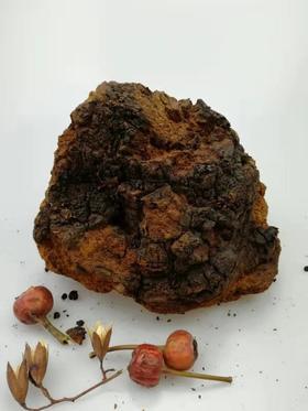 俄罗斯野生桦树茸~20年茸龄原生大块(880g)