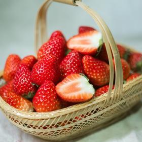 帮卖精选 | 大凉山西昌 红颜巧克力草莓 鲜嫩可口 现摘现发 3斤装 顺丰包邮到家