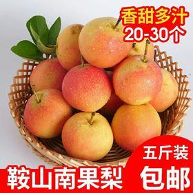 甜 正宗南果梨 东北南国梨10鞍山特产新鲜水果梨子5斤香水梨包邮