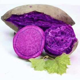 现挖紫薯10斤新鲜包邮农家自种地瓜当季蔬菜小番薯红薯5蜜薯