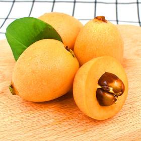 云南蒙自枇杷 新鲜水果 现摘现发  诱人香味 清甜多汁 3斤包邮