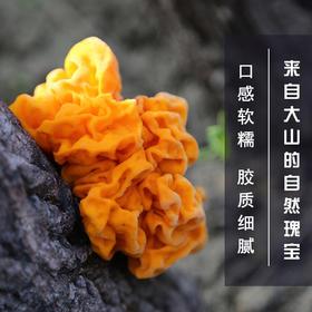 白水江保护区野生金耳200克包邮 野生优质黄金耳脑耳黄耳煲汤食材