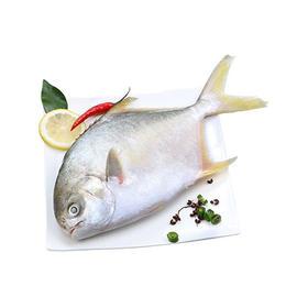 东海野生鲳鱼,6斤78包邮