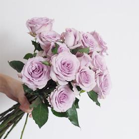 玫瑰 || 49元/束