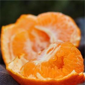 帮卖精选 | 耙耙柑 春见橙子 吃多不上火 橙味香甜 5斤装 细腻多汁 轻软甜蜜