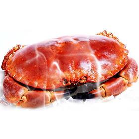 爱尔兰黄金蟹,一只有一斤多