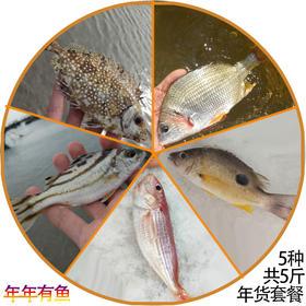 「儋州」一片海年货套餐-年年有鱼(丁公鱼、泥猛鱼、二点鱼、金丝鱼、黄翅鱼)