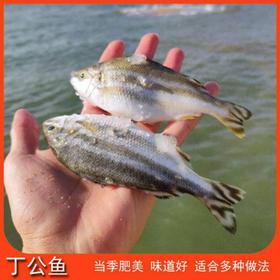 「儋州」野生海鱼-一片海渔业专业合作社的扶贫产品