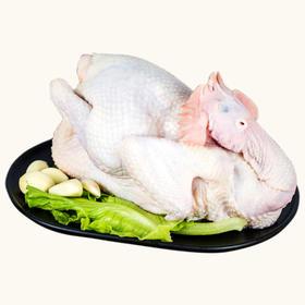 「海口」冰鲜鸡-牧榕农业开发公司的扶贫产品