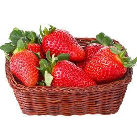 丹东九九红颜A级草莓2.5斤大果