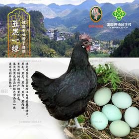 重庆 黔江 新地界苦荞乌鸡蛋40个/盒 1.7kg