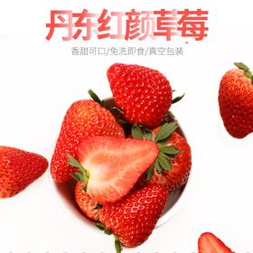 辽宁丹东红颜草莓 特级大果2.5斤