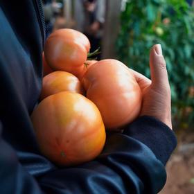 有味番茄 | 番茄中的劳斯莱斯 适合生吃 4.5斤顺丰包邮 自然成熟大小不一、味浓多汁/ 西红柿 / 极客农场