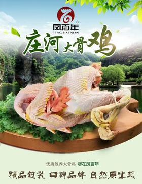 【1月31日截单】庄河凤百年大骨鸡  速冻白条大骨鸡 散养大骨鸡白条鸡