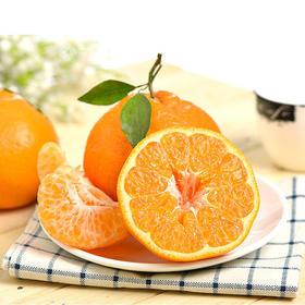 【新鲜水果】春见,耙耙柑   8斤装