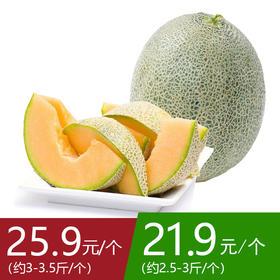【次日提货】海南特级25号晓蜜瓜  1个