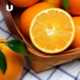 纽荷尔甜橙 香甜爆汁 初春特惠买5斤送5斤实发10斤(3~4颗/斤)综合甜度15度+