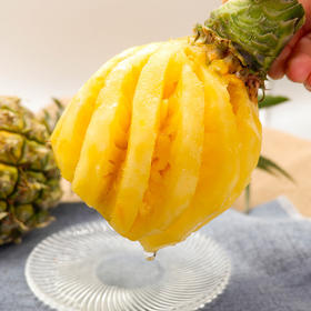 【买就送开孔器】酸甜多汁的云南香水小菠萝  薄皮易切 树上自然熟 产地现摘新鲜直达 8斤装