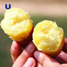 地瓜界的爱马仕 | CCTV报道推荐 海南标志性农产品 澄迈桥头富硒地瓜 5斤