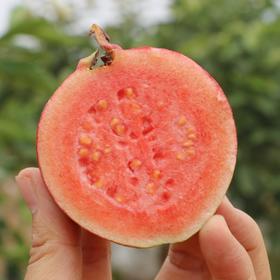 送5包酸梅粉 | 红心番石榴 芭乐 清脆鲜甜 软糯香甜 低糖健康水果