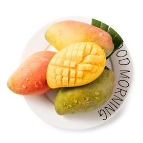 【鲜果预售】海南贵妃芒果||第二批预售||精选大果 ||甜蜜多汁 细腻滑嫩