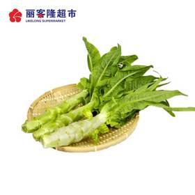 新鲜莴笋 500g/份青笋莴苣  新鲜蔬菜生鲜