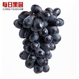 南非黑加仑黑提 7.5元/斤 精选2.5斤装 提子葡萄 脆甜 新鲜水果-835028