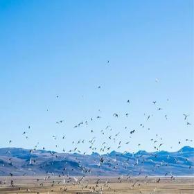 【西藏林芝山南环线】湛蓝天际下的前世今生,梵香圣火中的信仰虔诚—拉萨/林芝/山南/纳木措8晚9天