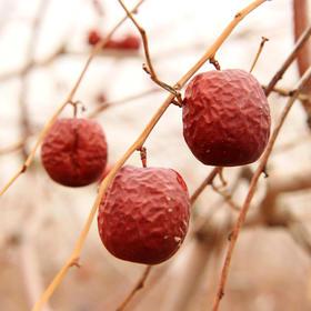 和田自然农法红枣 枣茶 酵素农耕生态枣