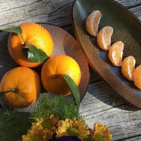云南高原沃柑10斤 新鲜水果橘子桔子丑橘皇帝柑贡品柑橘沃柑包邮