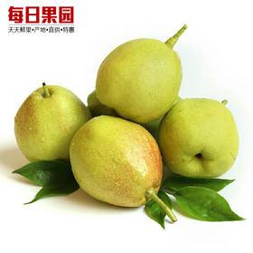 新疆库尔勒香梨 7.9元/斤 精选3斤装 新鲜水果 新疆特产-835053
