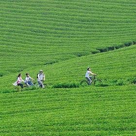 【单身专题】10.27相约网红自行车公园,骑行最美茶海小径(1天活动)