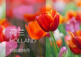 【定制简案】阿姆斯特丹+鹿特丹+布鲁塞尔  9日 | 多方式欣赏郁金香,古老原生态风车村