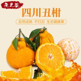 尧之谷不知火丑橘 精品9斤装
