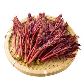 红油香椿芽 三峡特产 新鲜蔬菜 现摘现发 顺丰包邮