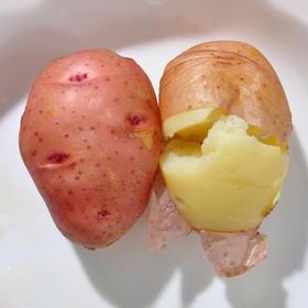 助农 | 云南高原红皮新鲜小土豆 农家自种蔬菜马铃薯迷你洋芋10斤装