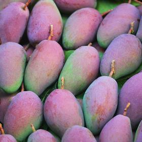 海南三亚贵妃芒果中大果10/斤装当季新鲜水果红金龙