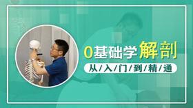 0基础学解剖,从入门到精通(28节系列课);朱国苗博士